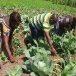 Mejorando el conocimiento y las prácticas alimentarias tradicionales de los indígenas Bambuti en la Región de los Grandes Lagos, RDC